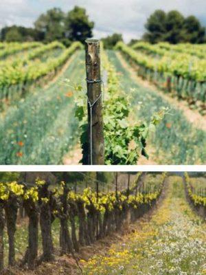 viticulture_bio1024x512